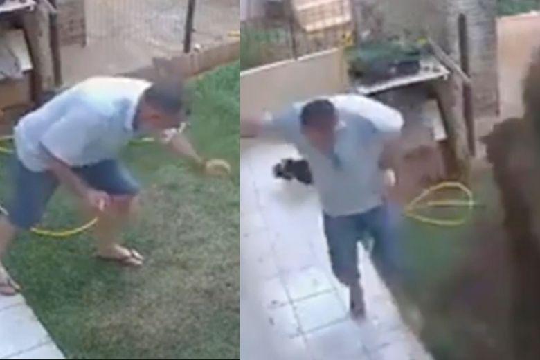 blows up garden cockroach